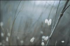horas serenas del ocaso breve (jotaaguilera) Tags: nikon d610 nikkor 105mmf2ddc desenfoque dof bokeh luz light puñetas blue azul blur blurry