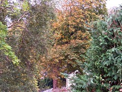 5564 Autumn colour on Horse chestnut - Conker tree - Aesculus hippocastanum. (Andy - Busyyyyyyyyy) Tags: aaa autumncolour bbb browns ccc conifer hhh horsechestnut leaves lll needles nnn ooo orange silverbirch sss aesculushippocastanum