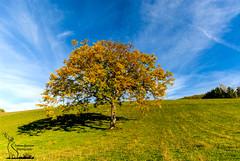 Walnut tree: the Zeuss' tree (simone_aramini) Tags: nature landscape lavalnerina lucinaturali landscapes nikond200 nikon naturallight nationalgeografic ngc natura green greatphotoraphers outdoor sky scapes