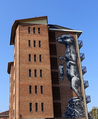 ROA (BE'N 59. Street photographer) Tags: streetart turin torino roa mouse
