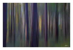 sunset light in autumn forest (mmsig) Tags: trees forest baum wald sonne sun autumn herbst abendlicht sunset color abstract icm movement longexposure lzb langzeitbelichtung schwenk niedersachsen lowersaxony germany wedemark mmsig blurred lines eos 80d ef1635 deutschland
