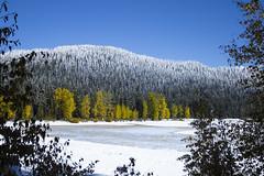 Anglų lietuvių žodynas. Žodis wood swallow reiškia medienos nuryti lietuviškai.