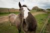 Dia de campo (..Javier Parigini) Tags: argentina cordoba generalroca campo caballo gralroca nikon nikkor d4 1424mm f28 ave aves birdcampo javierparigini flickr