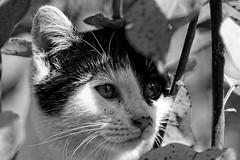 Jimmy_4 (Mitobaehr) Tags: katze cat portr portrait baum tree herbst autum leaf blatter bunt farben