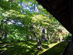 穏やかで、やさしい日々で、ありますように。大丈夫。 (aozora.umikaze) Tags: japan kyoto odayaka yasashii daijoubu aozoranoiro nikon s3000