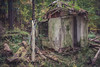 W o n d e r s O f D e c a y (Chris Robinson Photography) Tags: decay urbanexplorer forest lefttorot sigma35mmf14 rochesternewyork sodusnewyork ruins beechwoodcampgrounds trees deepinthewoods thewwoods camping errie