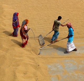 IMG_1040 Paddy dry processing