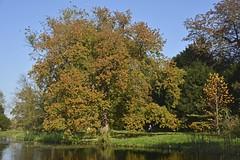 Herfst op landgoed Duivenvoorde (Mary Berkhout) Tags: maryberkhout landgoedduivenvoorde voorschoten herfst bomen trees autumn estate kleuren colors