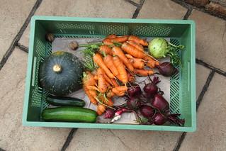 Harvest time (VII)