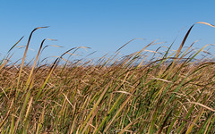 More Coyote Hills Grass (_quintin_) Tags: coyotehills fremont california