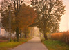 Into Fall Feeling ... (MargoLuc) Tags: autumn path misty mood trees colours warm golden red leaves fields countryside landscape sunlight sunset shadows houses outdoor