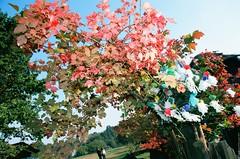 The gate, trees and bushes are decorated with paper flowers and ribbons. (Ігор Кириловський) Tags: slr nikonf5 af zoomnikkor 28105mmf3545d film kodak ektar100 promaster spectrum 7uv flash nikon speedlight sb28 fillflash c41 hutsulianwedding bukovina chernivtsi ukraine