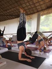 The Yoga People   Yoga Teacher Training Programs