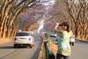 IMG_0080 (Couchabenteurer) Tags: simbabwe jacarandatree harare street