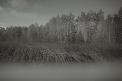 No Way to Grow (Samuel Bearweasel) Tags: artsy shoreline trees weeds blackandwhite prism