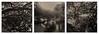 """Tenreuken pond"" Brussels (patrickvandenbranden) Tags: 10min 6x6 bw blackandwhite fineart hc110163 longexposure mediumformat monochrome naturallight nature ndfilter noiretblanc rolleirpx25 rolleicord toned xenar75mmf35 ancien étang pond reflets reflection tree pictorialist darkroomtechnique square darkroom triptych triptyque"