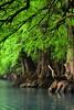 SABINOS. (NIKONIANO) Tags: agua ahuehuete árbol árboles arbre camecuaro forest loup mexicano mexico nikon paradise paradisiaco sabino surreal tangancicuaro tree water
