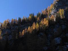 Macesni, obsijani z večernim soncem / Larches in evening sunlight (Damijan P.) Tags: hribi gore hiking mountains slovenija slovenia alpe julijskealpe alps julianalps krma velikipršivec jesen autumn prosenak