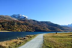 Silvaplanersee (Touqeer Ansar) Tags: nikond7200 nikon175528 mountains landscape goldenautumn graubünden nature herbst lake silvaplana silvaplanersee touqeer ansar touqeeransar