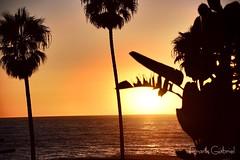 Manhattan Beach (frank.garcia1978) Tags: beachview ocean beach nikonphotography photographylover sunsetlover photography losangeles california sunsetcolors sunset manhattanbeach