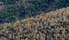 Foliage from North Baldface, New Hampshire (jtr27) Tags: dscf3058xl jtr27 fuji fujifilm fujinon xtrans xt20 minolta celtic 135mm f28 manualfocus hike hiking north baldface circle newengland newhampshire nh autumn foliage mc