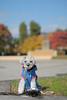 マイカメラ② (Theojiro) Tags: 10月 fujifilmxt2 fujifilm fujinon pronegstd xf56mmf12rapd テオ マイカメラ 単焦点レンズ 撮って出し 晴れ 秋 縦 長野運動公園