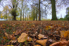 An autumn scene (msscoventry) Tags: coombeabbey labmode
