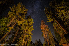 Sequoias and Milky Way (Owen Schooley) Tags: sequoia national park california usa redwood trees mountains kings valley canon 5d