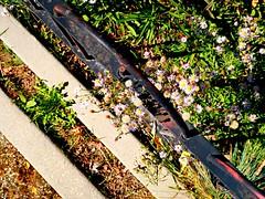 1 Looking Down Straight (Robert Cowlishaw (Mertonian)) Tags: fence cement concrete weeds green purple downlookingstraight mertonain robertcowlishaw lunchwalk canon powershot g7x mark ii canonpowershotg7xmarkii layers borders