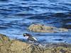 Preening sea bird (Artybee) Tags: john o'groats scotland caithness northeastern tip highland wick journey's end harbour boat sea coast beach