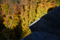20171014-1621-dsc_3451 (Stefan Hundhammer) Tags: kulmbach rehberg franken franconia goldeneroktober herbstlaub autumnleaves fallleaves rehturm blickvomrehturm sigma24105f4 herbstspaziergangrehberg20171014
