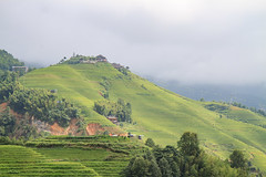 rice terrace - 5
