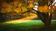 Lightrays (johaennesy) Tags: lightrays godrays autumn tree leaves meadow opensourcesoftware gimp rawtherapee golden evening pentaxian
