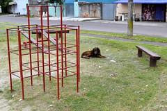 (diogo_furtado) Tags: dog day cachorro curitiba playground parque