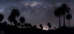 Palmar y vialactea (Takk Heima Fotografia) Tags: palma chilena chile nocturnas fotografia larga exposicion instagram astrofotografia