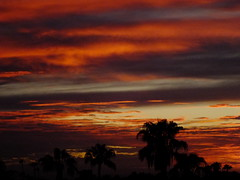 Fiery Night (Scott Douglas Worldwide) Tags: g golden godlike glorious gold god great glow sky s sunrays smiling sun sunset sexy sunrise colour closeup c clouds cute classic custom camera calming cool mystical m misty magic perfect peaceful paradise p palmtree palm palms palmtress pretty pink pp freedom f flickrunitedaward firesky fire az arizona awesome america american amature atlasta awsome beautiful badass b bright bronze