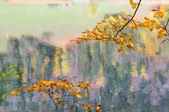 Herbstidylle am Alatsee (SonjaS.) Tags: allgäu alatsee herbstlaub buchen reflexionen reflektion natur wasser herbst autumn spiegelung tele