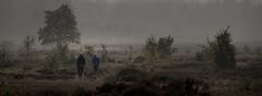 Op de grote stille heide (Bram Meijer) Tags: kootwijkerzand radiokootwijk nederland netherlands panorama natuur wandelen walking sfeer tegenlicht kootwijk herfst fall autumn oktober