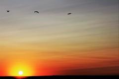 Enviing the birds (Photogioco) Tags: danube sunset red river fiume bulgaria romania minimalist border vista view photo fotografia