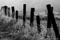 Frozen Fence (Johan Konz) Tags: frozen fence mist winter dof depthoffield grass blackandwhite bw landscape outdoor rural purmerend waterland netherlands nikon d90 pole monochrome diagonal