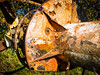Putgarten 17.jpg (vossemer) Tags: texturen rost abstraktes rügen inseln orte bildart putgarten mecklenburgvorpommern deutschland de
