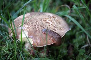 The Mushroom Snack