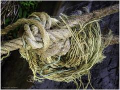 Gordian Knot (Luc V. de Zeeuw) Tags: knot rope ropes lasimplicite para suriname
