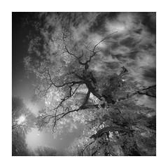 Autumn Glow (W.Utsch) Tags: infrared explore