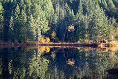 Fall Colour - Loon Lake (Roshine Photography) Tags: colours loonlake fallcolours alberniclayoquotf britishcolumbia canada ca forest wood landscape water tree lake grass reflection