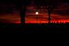 bergamo burning sunset with silhouette (freemanphoto) Tags: bergamo visitbergamo sunset tramonto red rosso arancio orange fall autunno autumn autumnweather nuovole cloud couldporn sky skyporn redsky skyred lenticolari lombardia lombardy italia italy fuoco brucia fire silhouette lantern crepuscolo dusk tree park alberi parco
