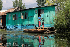 It's all about the right colour (AlpinePhotography) Tags: dallake foto fotograf fotografie india indien janmüller kashmir reise see spiegelung srinagar natural naturalalpinephotography natürlich reflection travel turquoise türkis