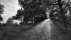 Sunset on the Fireline (NVenot) Tags: wildland fire firefighting firefighter smoke sun sunset set rays light smoky grass nature monochrome black white samsung s6 s6active line tree forest