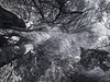trees of vancouver 70 (keith[martin]working) Tags: keithmartin keithmartinworking forest cedars branches layers trees infrared ir blackandwhite bw pattern pov