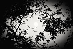 First moon of October (cynthiarobb) Tags: